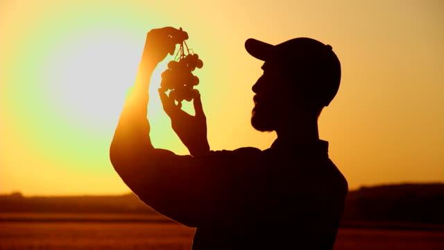 farmer checking the vines at sunset - azienda vinicola video stock e b–roll