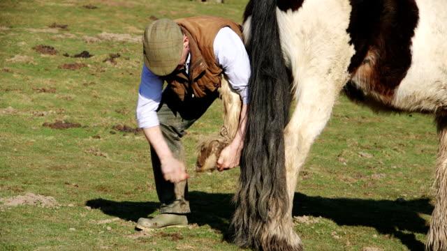 stockvideo's en b-roll-footage met boer schoonmaken paard hoof - alleen één mid volwassen man