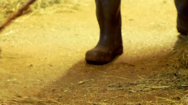 vidéos et rushes de agriculteur, nettoie l'écurie de foin - foin