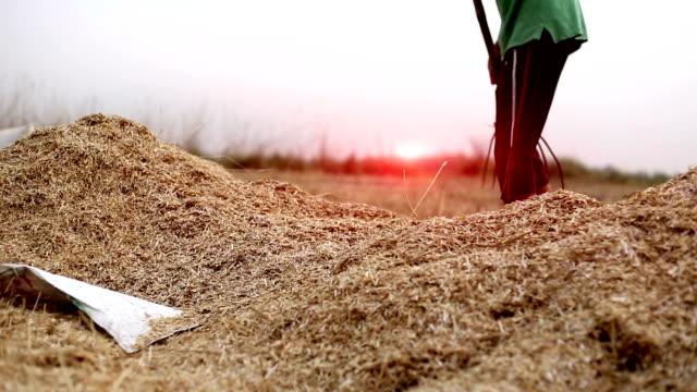 bonde samlande skalet efter skörd av vete grödor - skalhylsa bildbanksvideor och videomaterial från bakom kulisserna