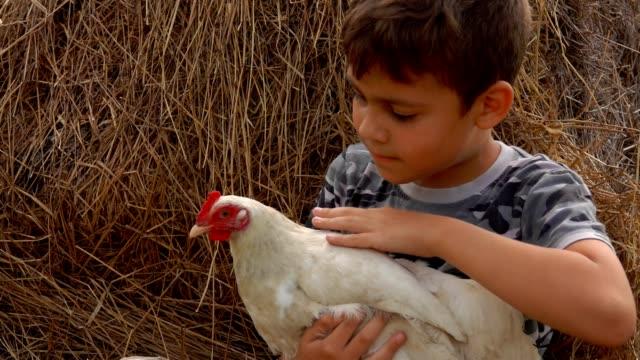 vídeos de stock e filmes b-roll de farmer dark-haired boy is stroking a chicken - rancho quinta