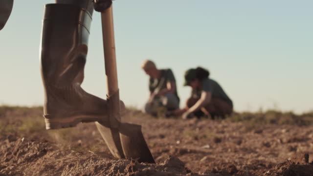 farmer digging potatoes in the field - four seasons filmów i materiałów b-roll