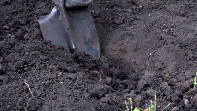 a farmer digs a hole for planting a tree in the garden - gardino video stock e b–roll