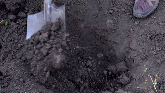 A farmer digs a hole for planting a tree in the garden video