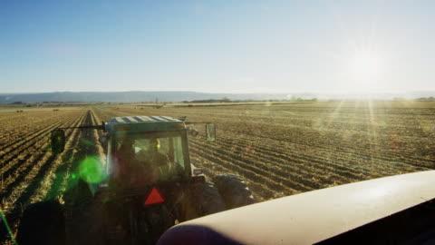 un contadino guida il suo trattore attraverso un campo di mais al raccolto con le montagne sullo sfondo sotto un cielo chiaro e blu - agricoltura video stock e b–roll