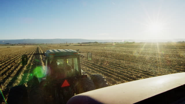 a farmer drives his tractor through a corn field at harvest with mountains in the background under a clear, blue sky - trattore video stock e b–roll