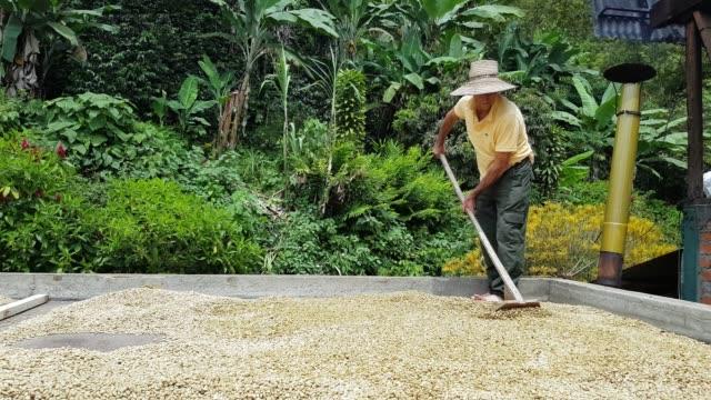 vídeos y material grabado en eventos de stock de agricultor secando el café en su granja - colombia