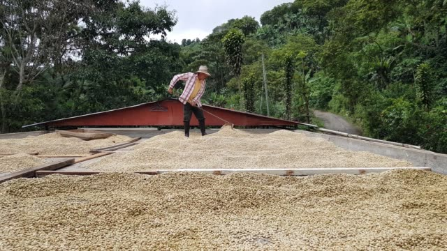 farmer drying the coffee - coffee farmer video stock e b–roll