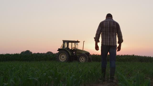 la farmer esamina le piante su un campo al tramonto - trattore video stock e b–roll