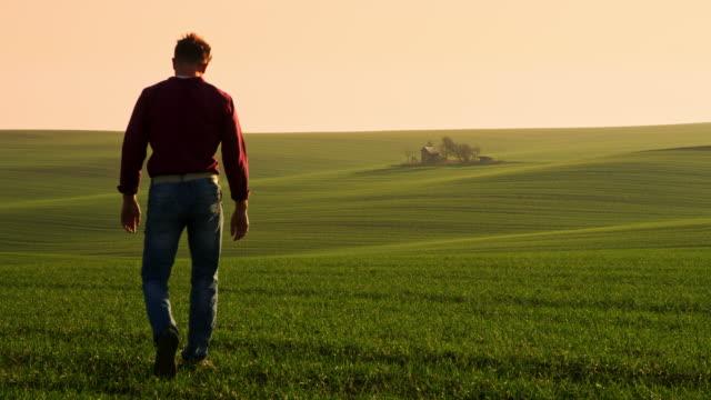 ws agricoltore che esamina le piante di grano sul campo - paesaggio collinare video stock e b–roll