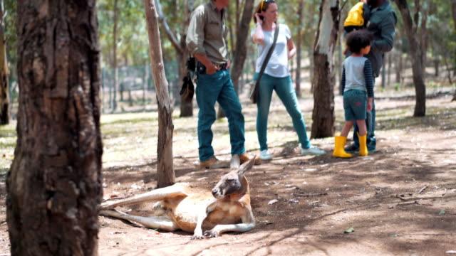 Landwirt erklären über Kangaroos auf einem Bauernhof – Video