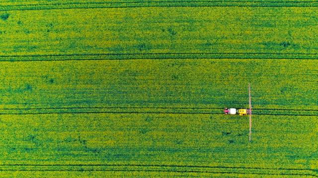farmer fertilizing young colza with pesticides gmo. - insetticida video stock e b–roll