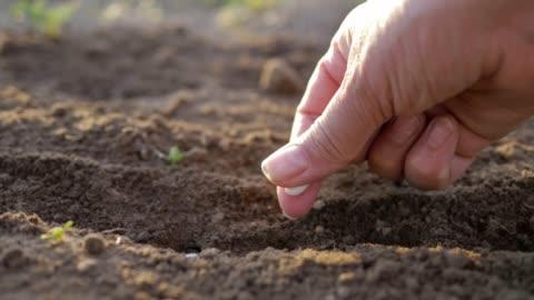 vidéos et rushes de main de fermier plantant des graines dans le sol - graine