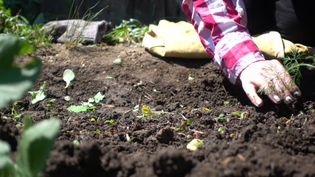 Farmer hands cleans the soil from weeds on a Sunny day