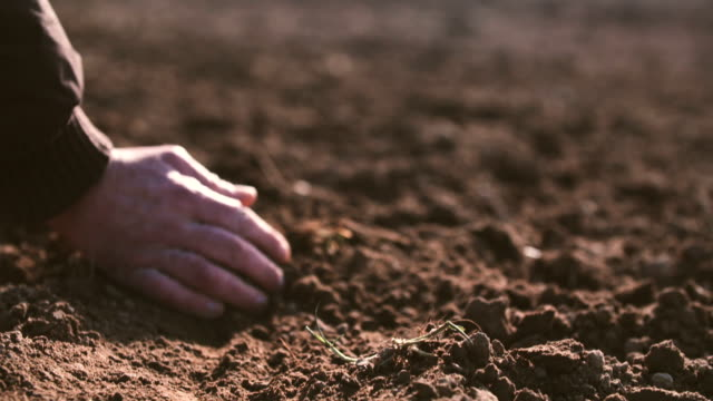 Farmer hands holding and pouring back organic soil. Soil, Agriculture, Sunlight. Soil, Agriculture, Sunlight,Slow motion, Farmer hands holding and pouring back organic soil on sunrise light ground culinary stock videos & royalty-free footage