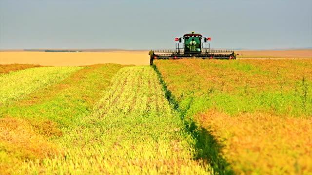 Farmer harvesting Canola field video