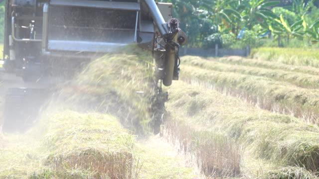 vidéos et rushes de fermier récoltant des récoltes de riz utilisant une machine - foin