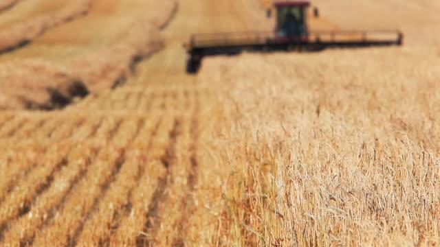 Farmer harvesting Wheat field video