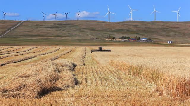 Farmer harvesting Wheatfield video