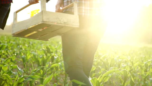 Farmer holding a box of freshly picked organic vegetables