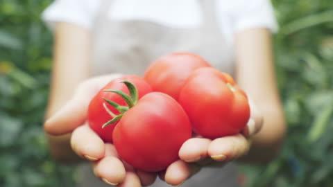 landwirt, der tomaten hält und zeigt. - gemüse stock-videos und b-roll-filmmaterial