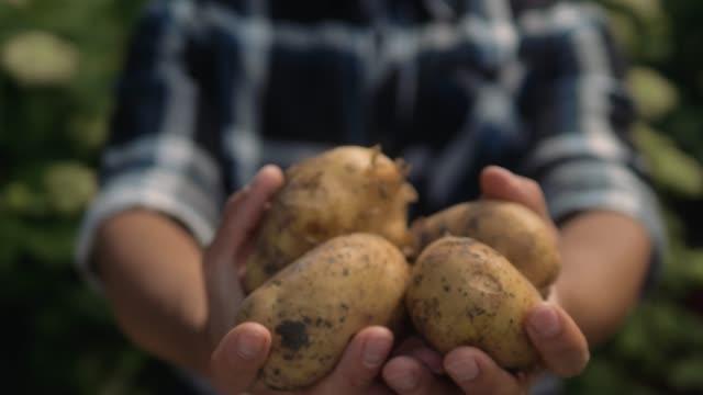 farmer holding in hands the harvest of potatoes in the garden. organic vegetables. farming - приготовленный картофель стоковые видео и кадры b-roll