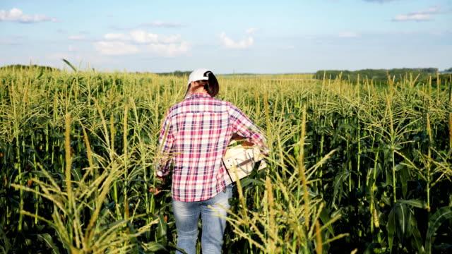 vídeos de stock e filmes b-roll de farmer in a field of corn with a wooden box - colher atividade agrícola