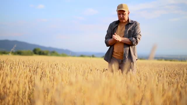 A farmer in a grain field