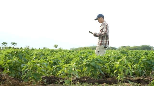 farmer in field - sesamo video stock e b–roll