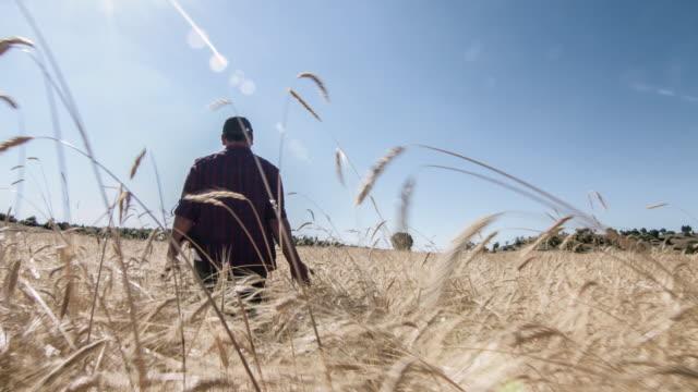 vídeos de stock e filmes b-roll de agricultor no campo de trigo - terra cultivada