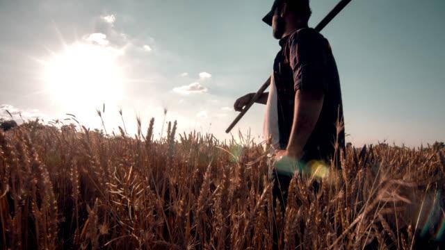 Farmer in Wheat Field video