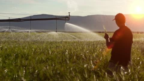 contadino controlla le colture - agricoltura video stock e b–roll