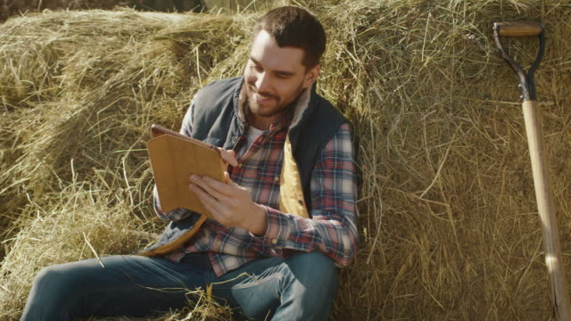 Farmer is sitting in hay and using a tablet computer. video