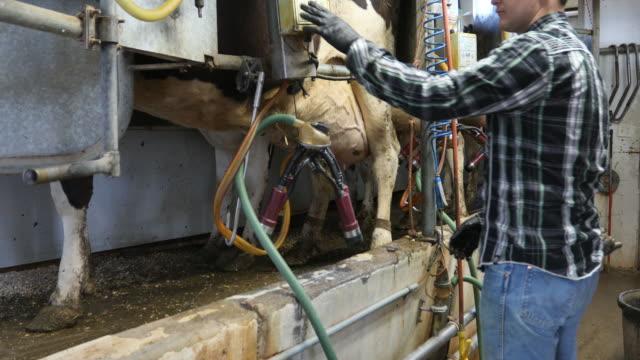 bonde mjölkning mjölkkor - boskap bildbanksvideor och videomaterial från bakom kulisserna
