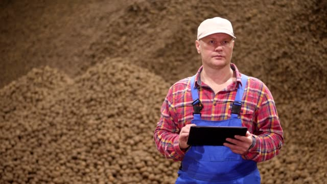 farmer monitor quality of potatoes with digital tablet. potato background, in storage warehouse. potato harvest, farming, agriculture, food industry video