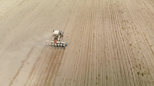 Farmer on a blue tractor with a seeder producing crops in dry sandy soil