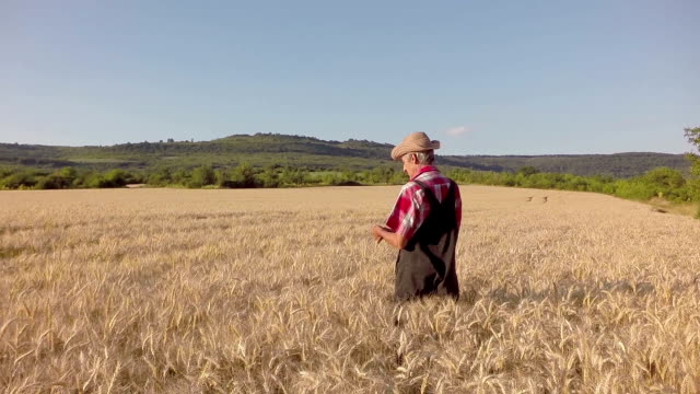 Farmer over looking the success of his crops slowmotion video