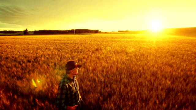 Farmer over looking the success of his crops. video