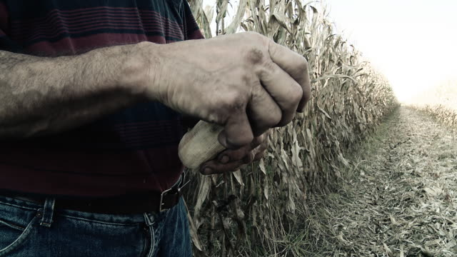 HD: Farmer Peeling Corncobs video