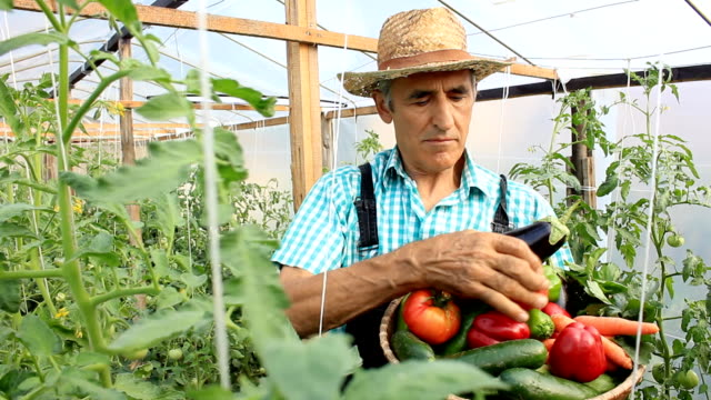 Farmer Picking Vegetables video