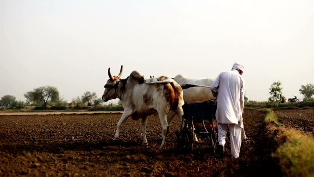 Farmer plowing field in traditional style