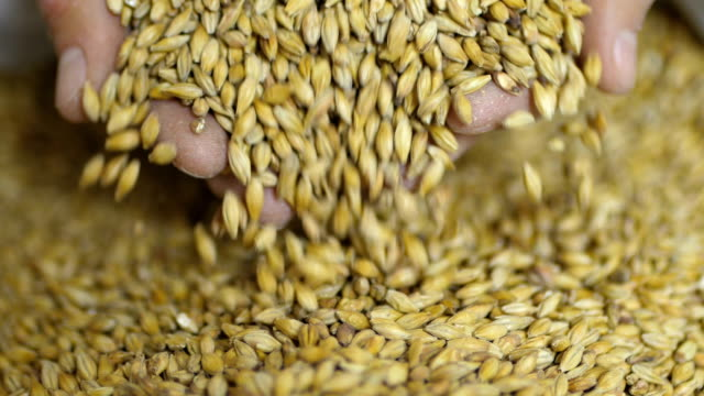 A farmer pours golden malt from his hands into a bag for making craft beer or whiskey A farmer pours golden malt from his hands into a bag for making craft beer or whiskey. ingredient stock videos & royalty-free footage