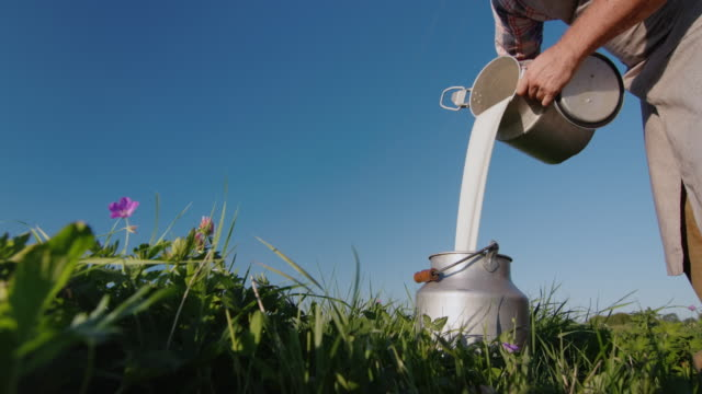 Farmer pours milk into the can against the background of a green meadow. Low angle shot video