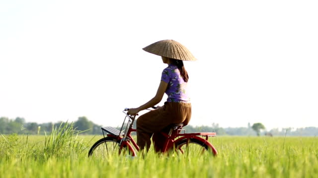 Farmer riding a bicycle in the rice field.