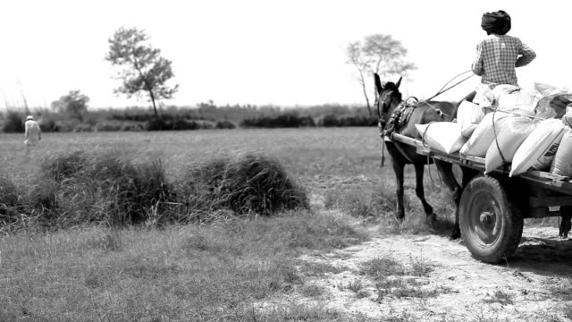 farmer riding cart to the field - cocchio video stock e b–roll