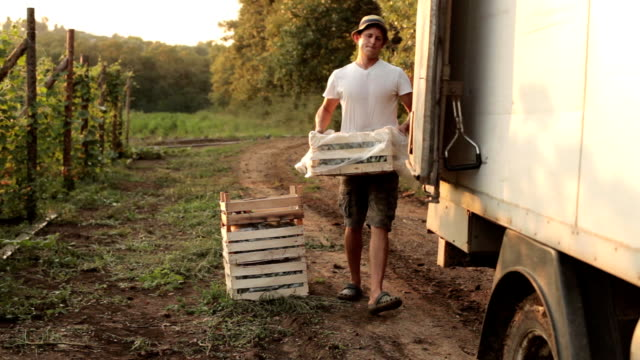 Farmer shipping boxes with vegetables in the truck video