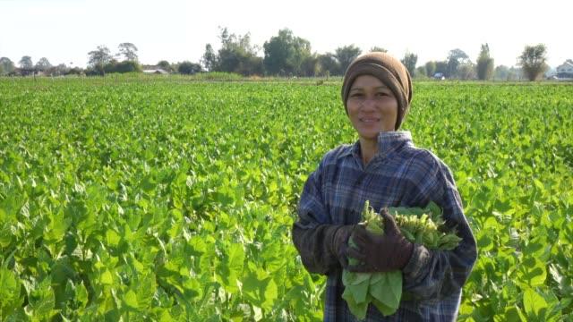 farmer smiling in tobacco field - nicotina video stock e b–roll