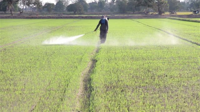 farmer spraying pesticide in rice farm video