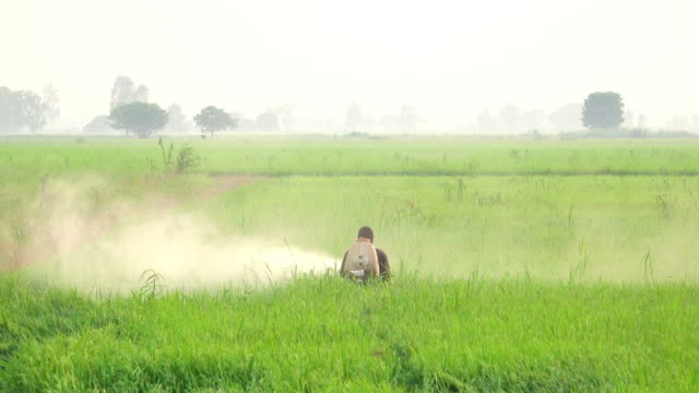 Farmer spraying pesticide in rice field Farmer spraying pesticide in rice field in morning parasitic stock videos & royalty-free footage