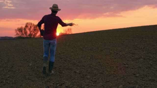 Farmer spreading,sowing seeds in idyllic,rural plowed field at sunset,slow motion Farmer spreading,sowing seeds in idyllic,rural plowed field at sunset. MS,slow motion. sowing stock videos & royalty-free footage
